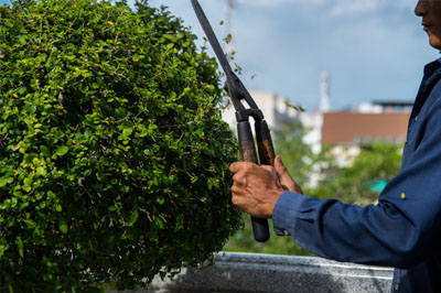 Pro Tree Service Sacramento - Tree Pruning 1