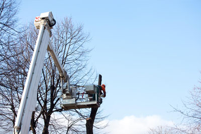 Pro Tree Service Sacramento - Tree Topping 1